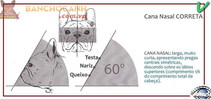 Tiêu chuẩn chó Bull Pháp