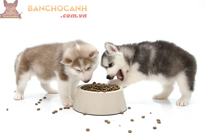 Thức ăn cho chó Alaska là gì ?
