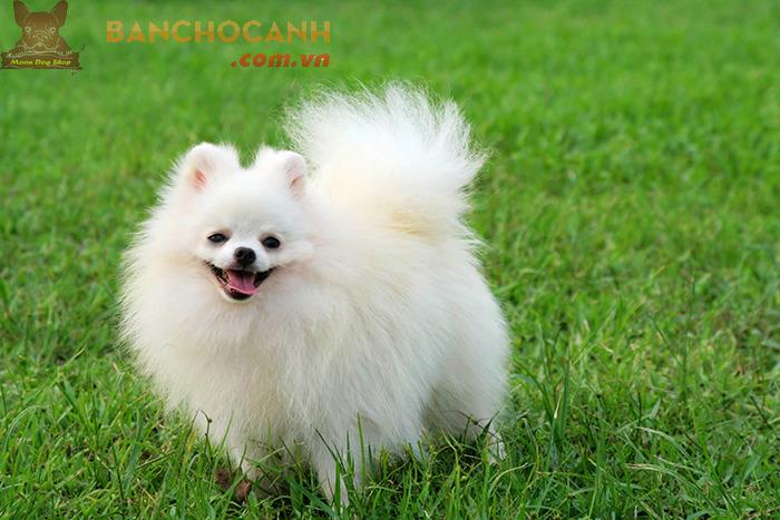 Dịch vụ vận chuyển chó mèo từ Hà Nội vào Sài Gòn ở đâu rẻ?