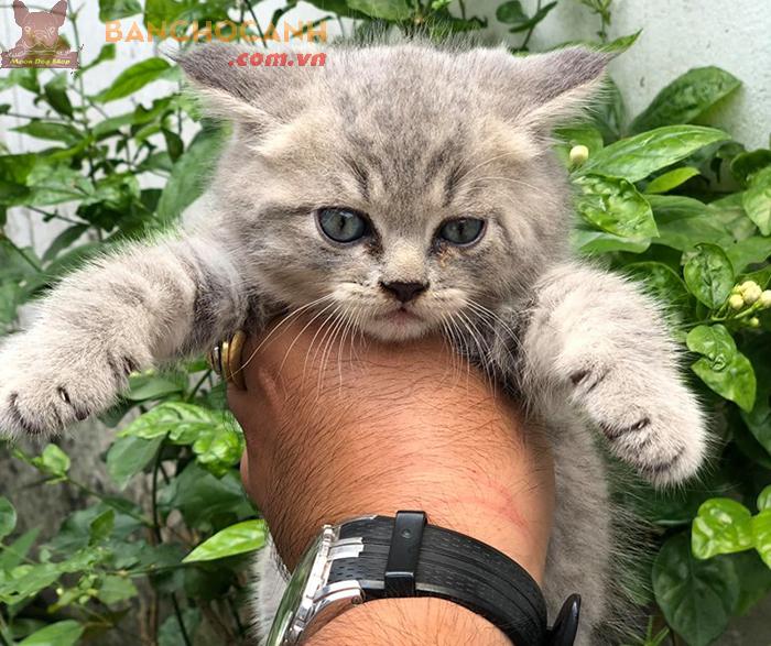 Công ty mua bán mèo cảnh Quảng Ninh